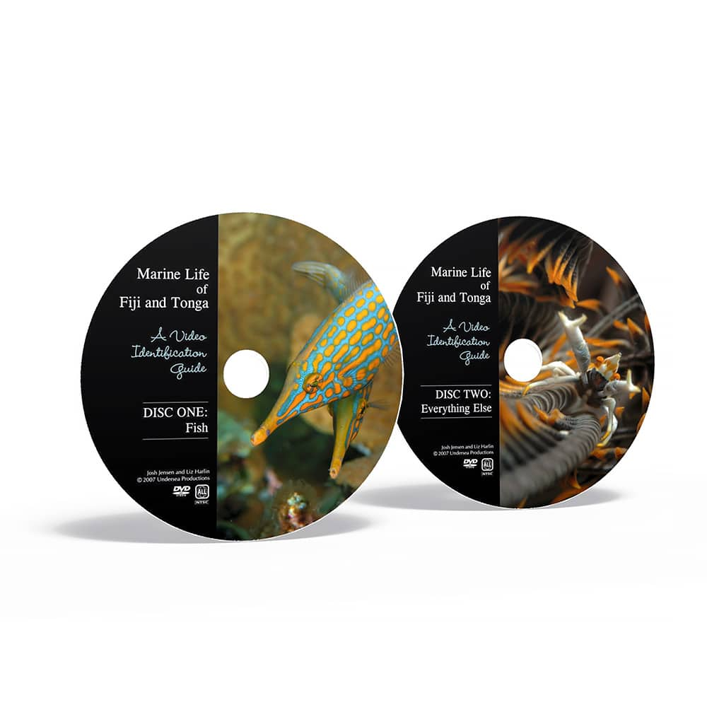 Marine Life Of Fiji & Tonga: A Video Identification Guide -- Comes 2 DVDs That You Can Play On Your TV Or Computer