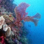 4K Underwater Video: A Fish Geek's View Of The Fiji Islands, In 2160p UltraHD