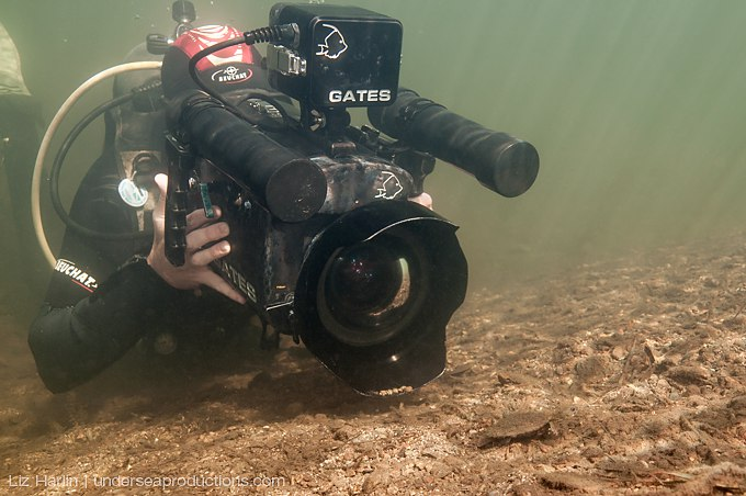 Underwater cameraman filming a young Mary River turtle