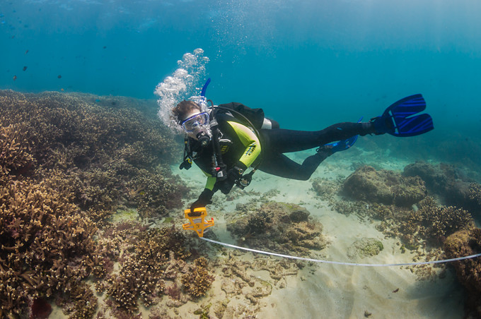 Underwater photograph of a scuba diver using a tape measure to measure and do transects of a coral reef in Moreton Bay, Brisbane, Queensland, Australia