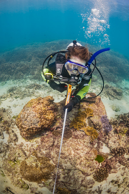 Underwater photograph of a female scuba diver scientist using a tape measure to measure and do transects of a coral reef in Moreton Bay, Brisbane, Queensland, Australia