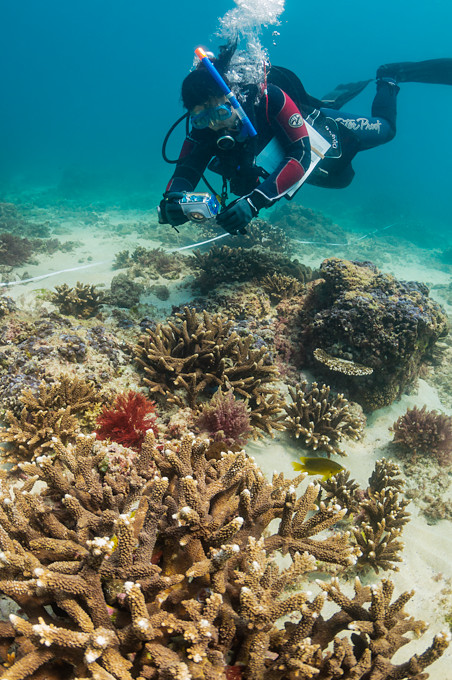 Underwater photo of a scuba diving science researcher taking photographs of a hard coral reef in Moreton Bay, Queensland, Australia