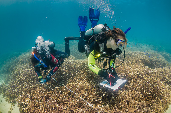 Underwater photo of two scuba diver scientists surveying a hard coral reef in Moreton Bay, Queensland, Australia