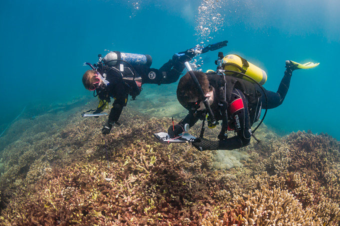 Underwater photo of two scuba diver scientists surveying a hard coral reef