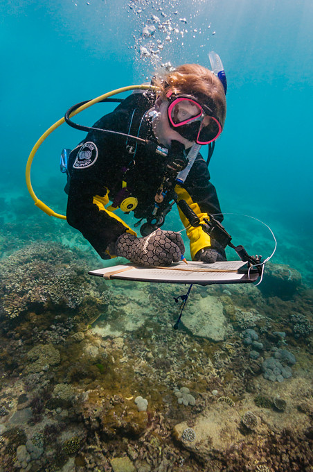 Underwater photo of a scuba diving scientist writing on a clipboard while surveying a coral reef in Moreton Bay, Brisbane, Queensland, Australia