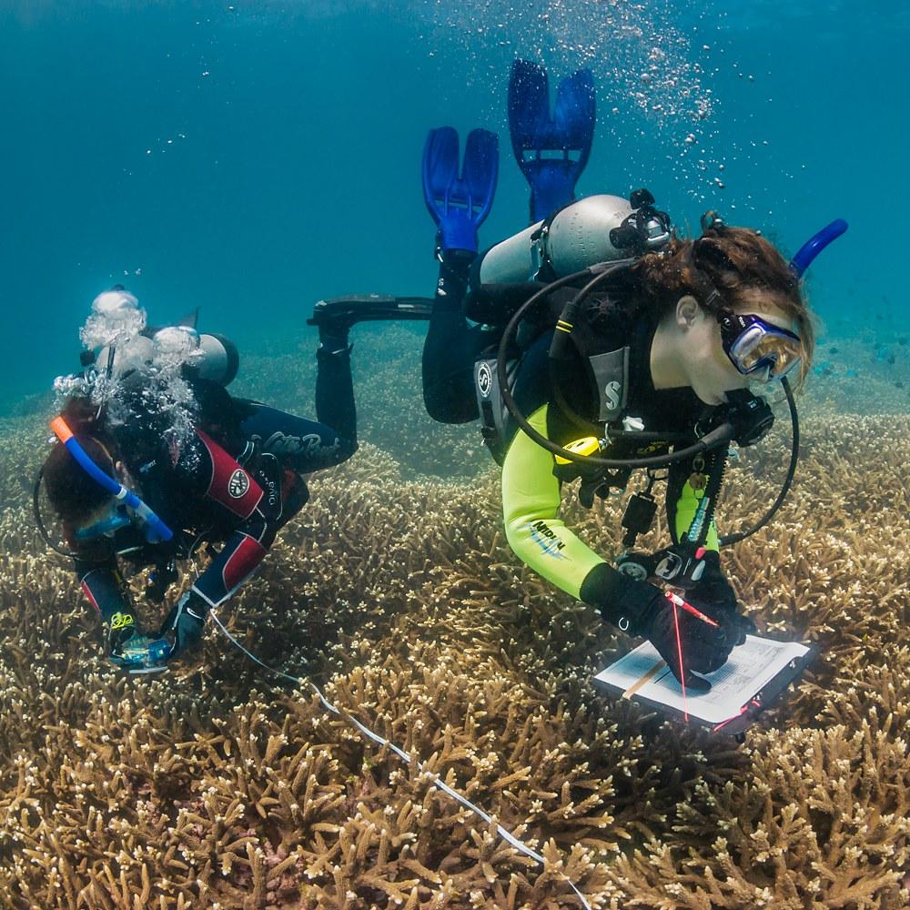 Reefcheck Australia
