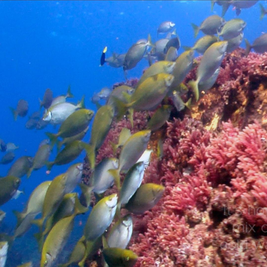 Moreton Bay CSA Video For Reef Check Australia