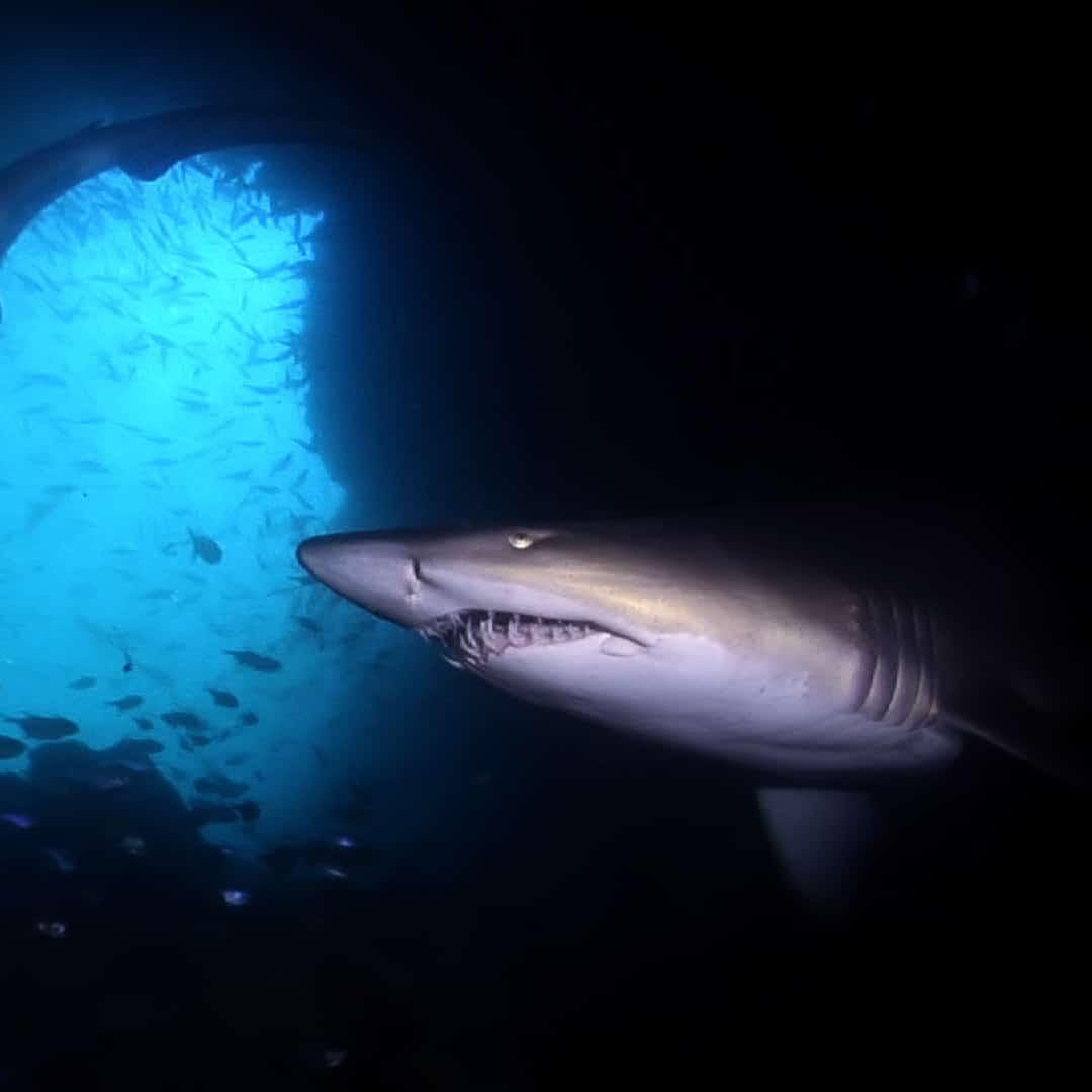 Underwater Stock Footage In 1080p