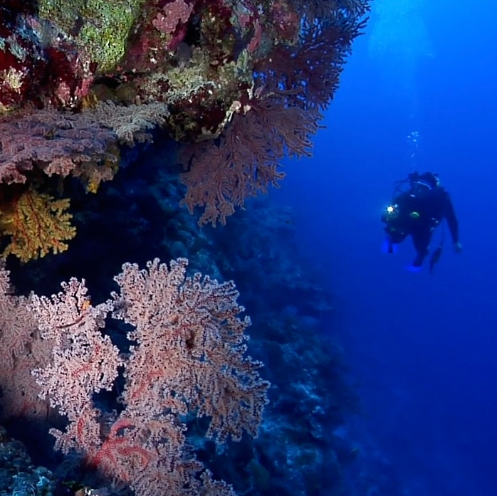 Protect Our Coral Sea (underwater Video Footage)