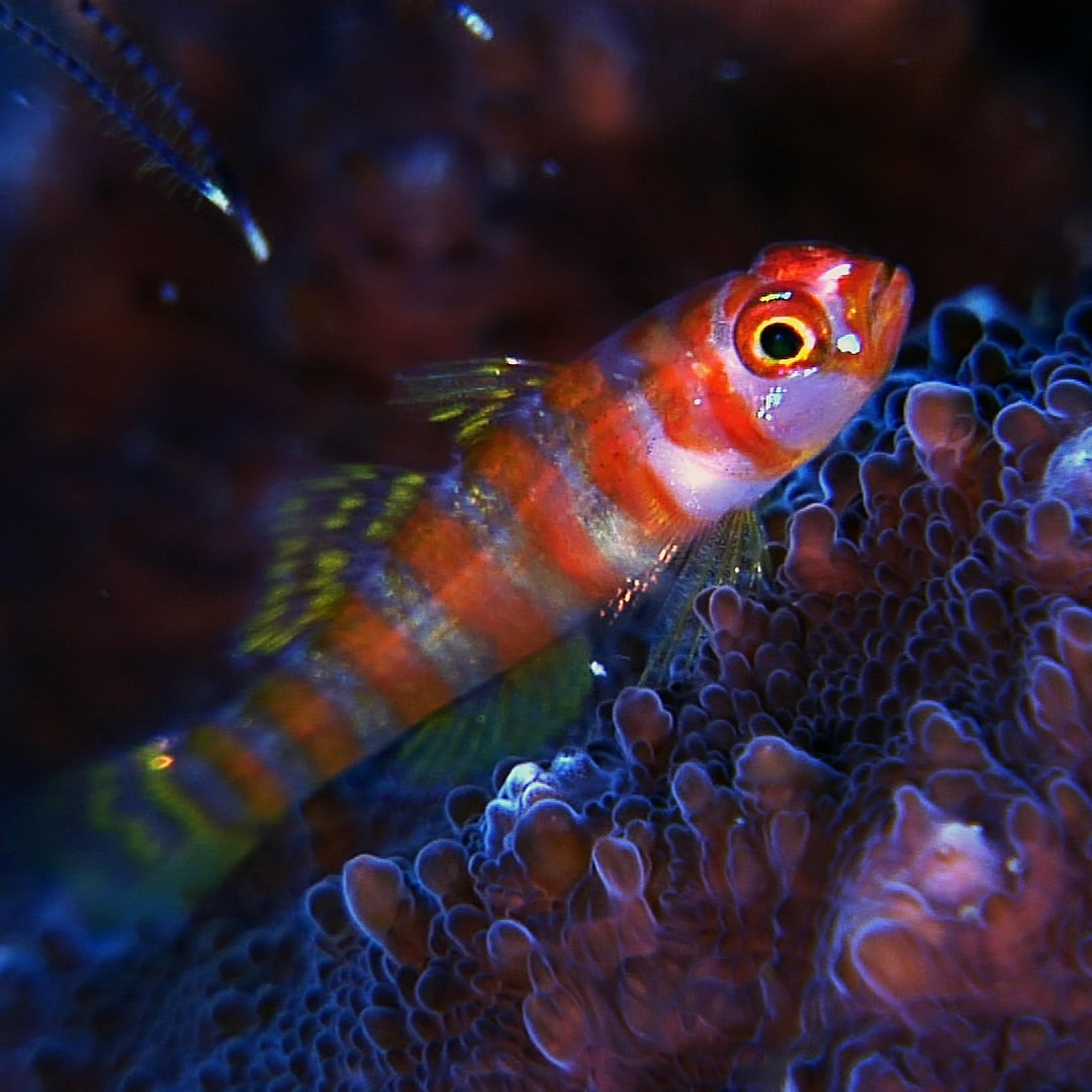 Underwater Video Stock Footage Of The Scuba Diving Experience In Alor And Flores (Indonesia)