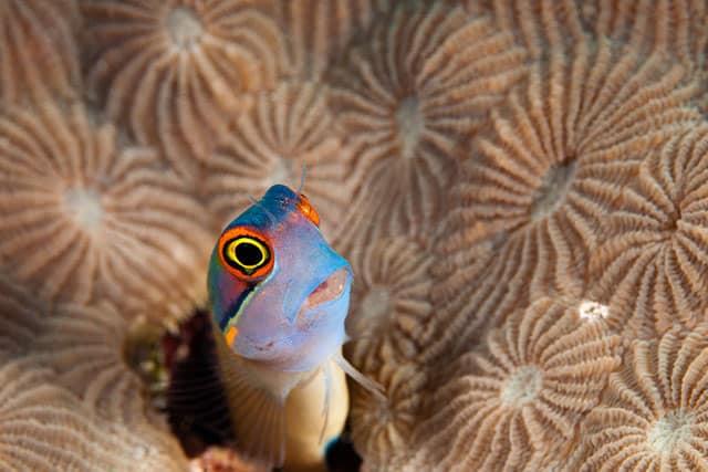 Underwater videos featuring marine life