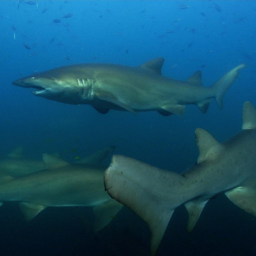 Diving At Barwon Banks, Wolf Rock And Barjon Wreck