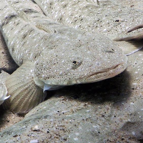 The Noosa Underwater Biodiversity Assessment Kicks Off