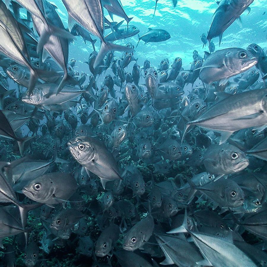 Underwater Footage In 4K UltraHD