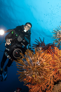 4K and HD underwater filming