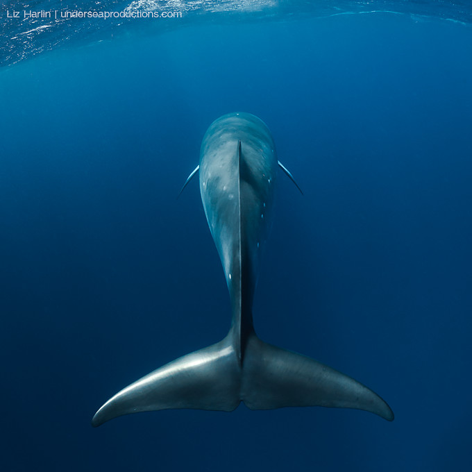How To Photograph Whales Underwater
