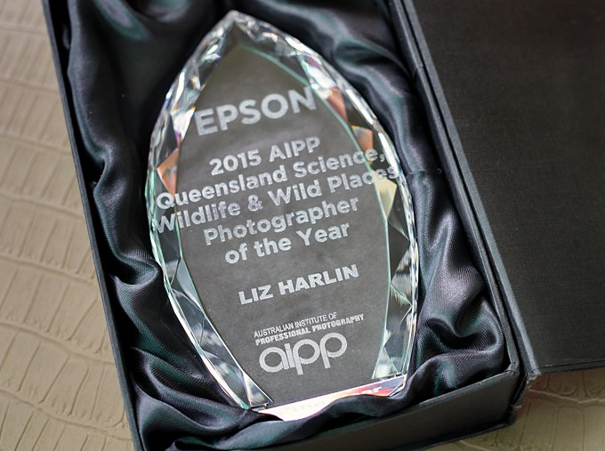 Queensland AIPP Wildlife Photographer of the Year 2015 award