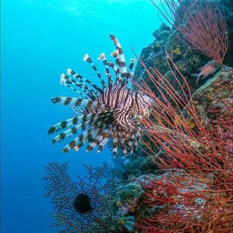 4K Underwater Footage