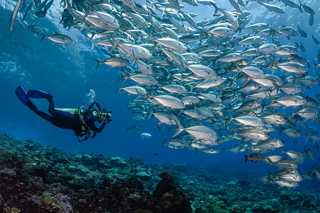 Underwater photographer Noosa