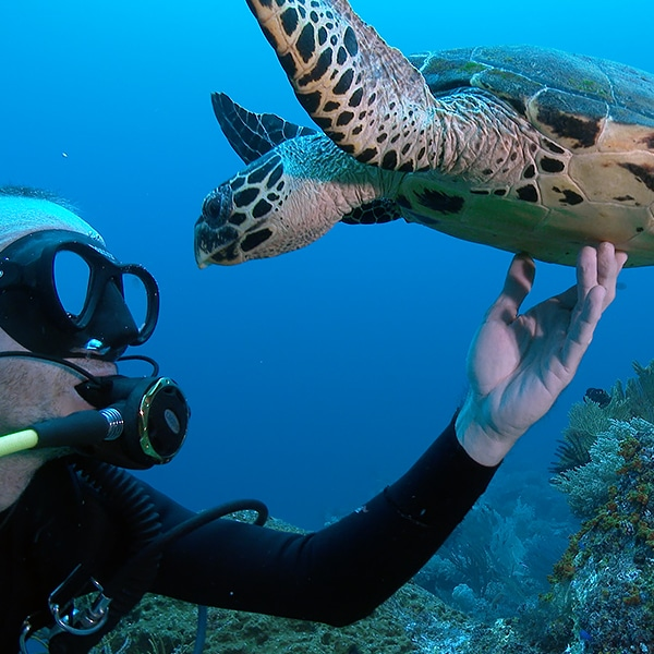 4K Underwater Footage From Indonesia