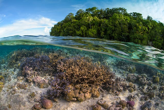 Coral reef and marine life stock photography, exclusive agent