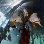 4K Video Of Raja Ampat, Indonesia Underwater Footage
